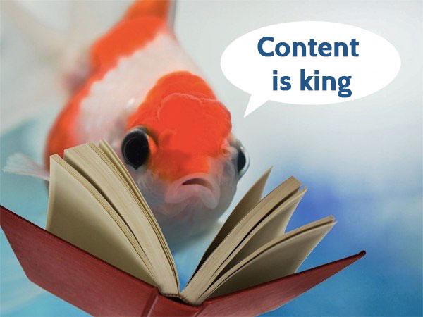 divinginweb brand content création de contenu digital